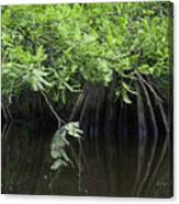 Cypress Leaves And Fluted Trunks Canvas Print