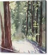 Cypress Mt. Canvas Print