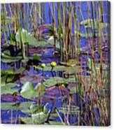 Cypress Pond Tranquility Canvas Print