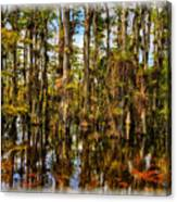 Cypress Strand Everglades Canvas Print