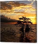 Cypress Sunset Canvas Print