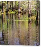 Cypress Trees Along The Hillsborough River Canvas Print