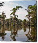 Cypress Trees And Spanish Moss In Lake Martin Canvas Print
