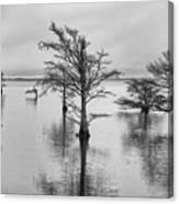 Cypress Trees In Lake Mattamuskeet North Carolina Canvas Print