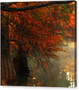 Cypress Trees In Red Canvas Print