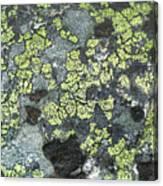 D07343-dc Lichen On Rock Canvas Print