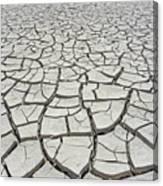 D17845-dried Mud Patterns  Canvas Print
