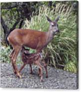 D2b6314 Fawn And Deer Mom Canvas Print