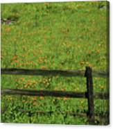 D7b6306 Fence And Poppies Canvas Print