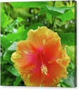 D9m-23 Orange Flower Canvas Print