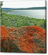 Da5869 Lichen Covered Rock Canvas Print