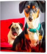 Dachshund Dog, Pug Dog, Good Time On Bed Canvas Print