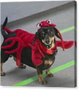 Dachshund Lobster Canvas Print