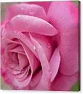 Daddy's Rose Canvas Print