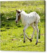 Romping Through The Field Canvas Print
