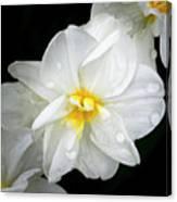Daffodil Diagonal Canvas Print