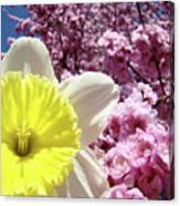 Daffodil Flower Art Prints Pink Tree Blossoms Blue Sky Baslee Canvas Print
