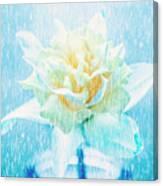 Daffodil Flower In Rain. Digital Art Canvas Print