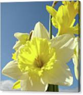 Daffodil Flowers Artwork Floral Photography Spring Flower Art Prints Canvas Print