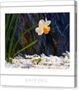 Daffodil Poster Canvas Print