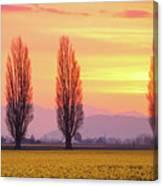 Daffodil Sunrise Canvas Print