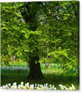 Daffodils And Narcissus Under Tree Canvas Print