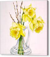 Daffodils And Pussy Willow Canvas Print