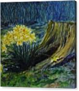 Daffodils And Tree Stump Canvas Print
