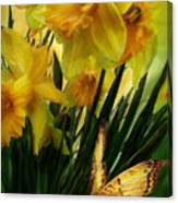 Daffodils - First Flower Of Spring Canvas Print