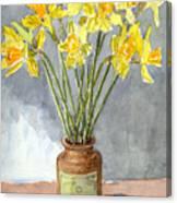 Daffodils In A Pot. Canvas Print