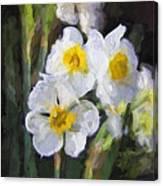 Daffodils In My Garden Canvas Print