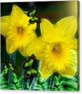 Daffodils In The Garden Canvas Print