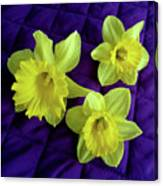 Daffodils On A Purple Quilt Canvas Print