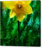 Daffy Dill Canvas Print