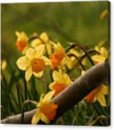 Daffy In The Woods Canvas Print