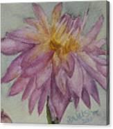 Dahlia At Eastport Me Canvas Print