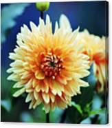 Dahlia Beauty Canvas Print