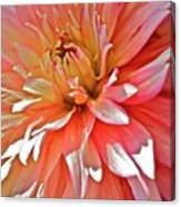 Dahlia Blush Canvas Print