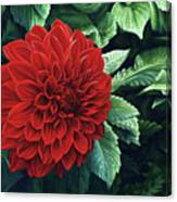 Dahlia Dawn Canvas Print