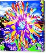 Dahlia Dazzle Canvas Print