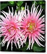 Dahlia Duo Canvas Print