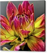 Dahlia Flame Canvas Print