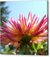 Dahlia Floral Garden Art Prints Canvas Summer Blue Sky Baslee Troutman Canvas Print