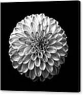 Dahlia  Flower Black And White Square Canvas Print