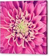 Dahlia Flower Petals Pattern Close-up Canvas Print