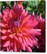 Dahlia Flowers Garden Art Prints Baslee Troutman Canvas Print