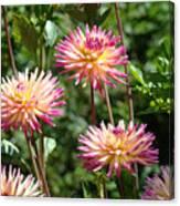 Dahlia Garden Floral Pink Yellow Botanical Landscape Baslee Troutman Canvas Print