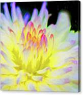 Dahlia In The Glow Canvas Print