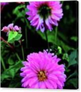 Dahlia Mirror Canvas Print