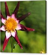 Dahlia Red White And Green Canvas Print